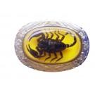Real Scorpion Belt Buckle